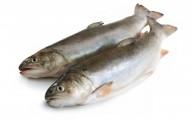 דגים וסרטן השד